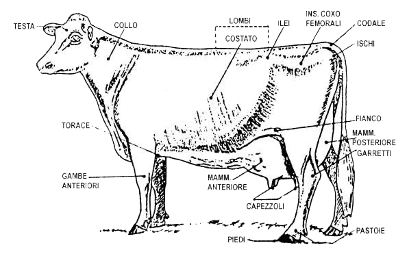 Qualità vacca da latte
