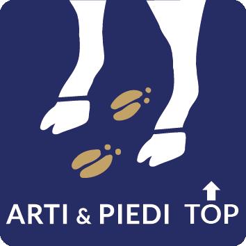 Arti e piedi