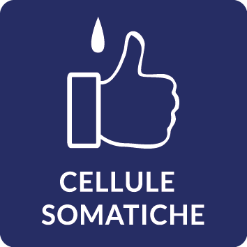 Cellule somatiche