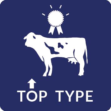 Top Type